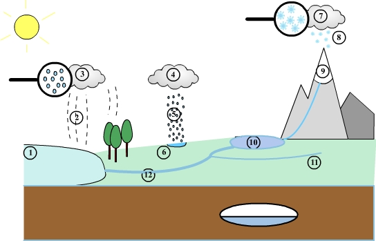 The water cycle in nature